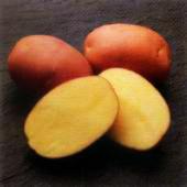 Описание сортов картофеля, продажа семенной картофель