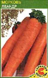 Описание сортов моркови, продажа семян моркови