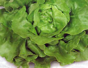 Описание сортов салата, продажа семян салата