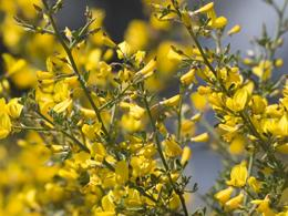 Флористика, дизайн, растения, цветы, икебана, композиция, стили