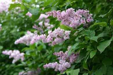 Фото цветы, фото растения, фотографии декоративные растения, каталог растений