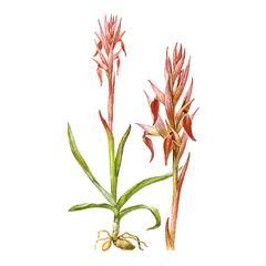 Красная книга растений, охрана природы, исчезающие виды, растения занесённые красную книгу
